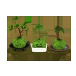 【ハウジングカタログ】庭具 > 花・植物 のハウジングアイテム一覧
