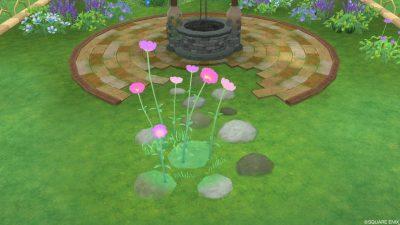 アストルティアの桃色花・2