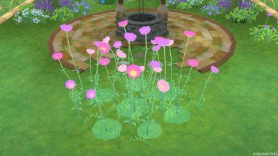 アストルティアの桃色花・3