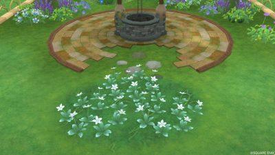 アストルティアの白色花・3