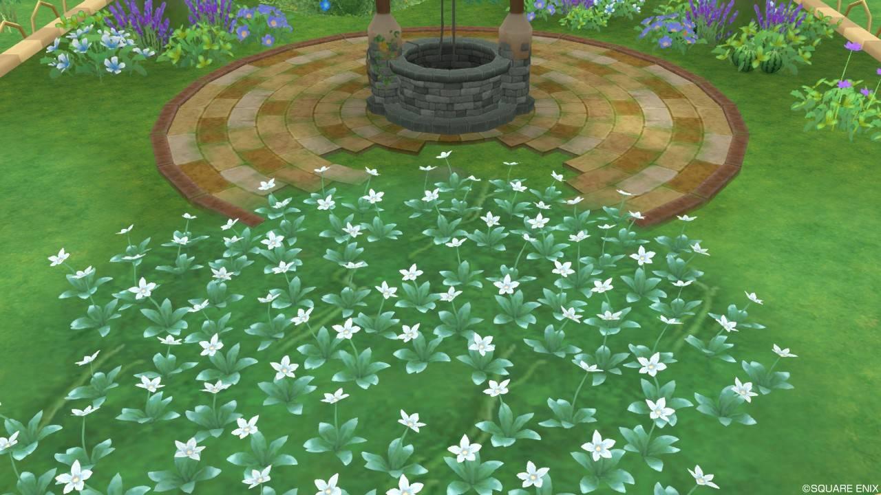 アストルティアの白色花・4