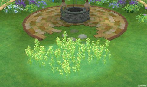 アストルティアの菜の花・3