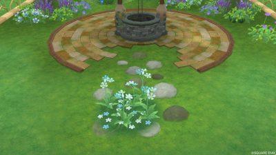 アストルティアの水色花・2