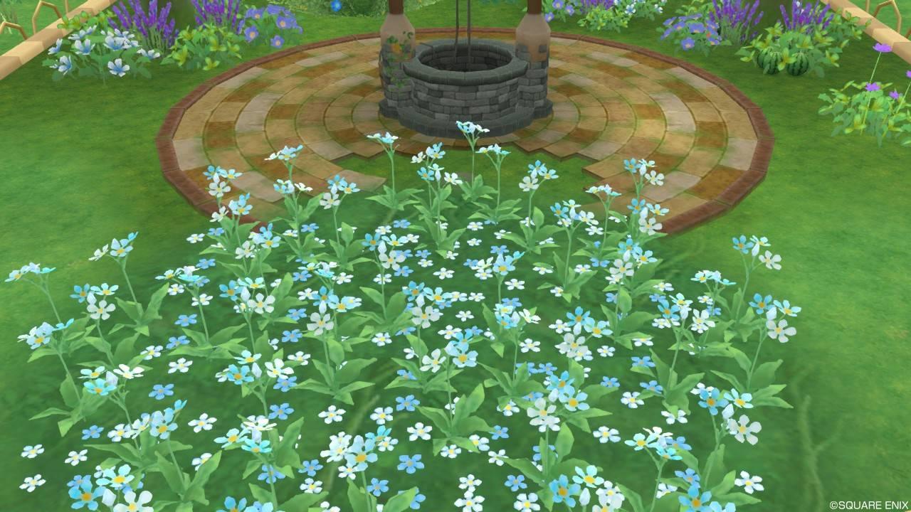 アストルティアの水色花・4