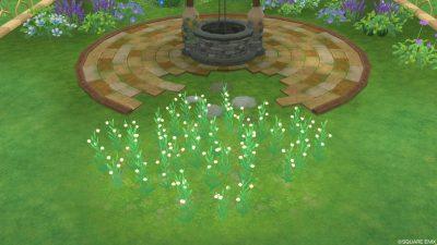 アストルティアの白小花・3