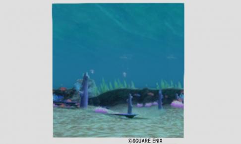 サンゴ礁かきわり