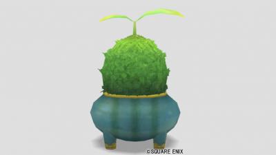 プロペラ草の鉢植え