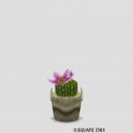 サボテンの鉢植え・家用