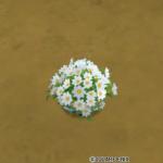 花の植木鉢・白