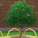 緑の木・中