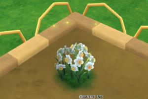 ホタル舞うスイセンの花