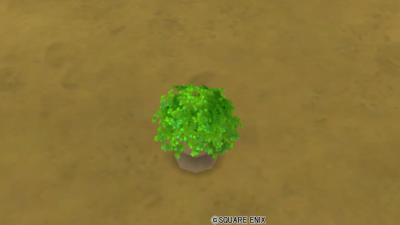 小さな緑の植木