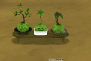 コケ玉の盆栽セット