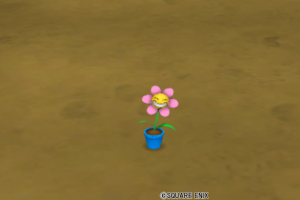 ニコちゃんの鉢植え・庭