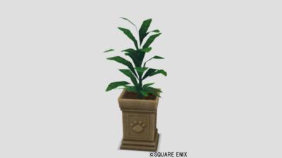 ネコ姫の観葉植物