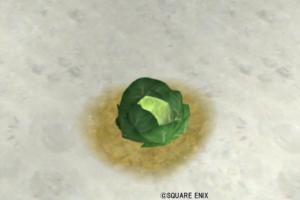【ハウジング】庭具 > 花・植物(庭)「ワルドキャベツ」