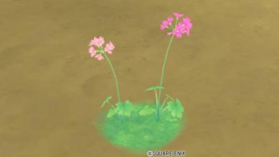 【ハウジング】庭具 > 花・植物(庭)「エピステーサ桃小花」