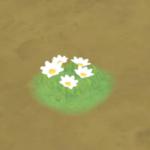 【ハウジング】庭具 > 花・植物(庭)「オルフェア白色花」