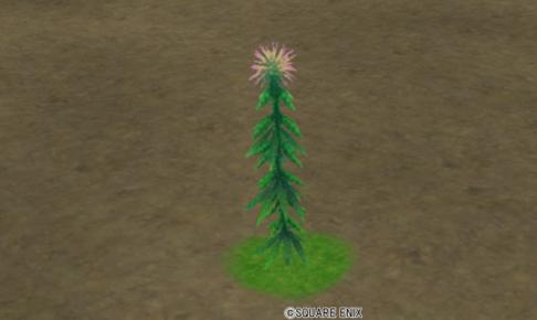 【ハウジング】庭具 > 花・植物(庭)「コルトリウム」